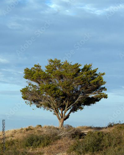 Canvas Natuur isolate tree