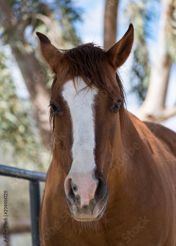 Plexiglas Paarden Jazzy