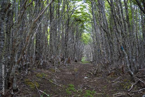 Aluminium Khaki Punta Arenas Chile forest during our hiking