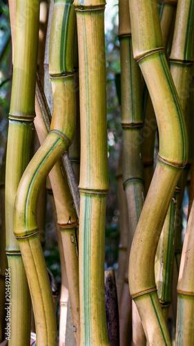 geschwungener Bambus