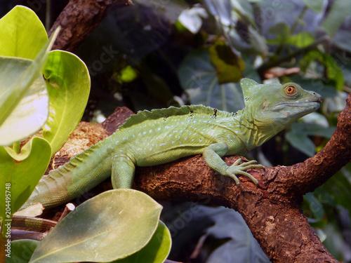 Fototapeta Reptil