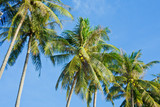 Holiday and vacation, palms tree, White clouds with blue sky  - 204497317