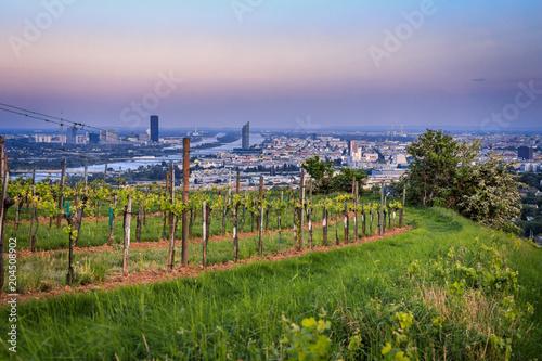 Fotobehang Wijngaard View over Vienna from the vineyards during blue hour