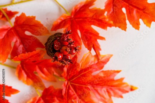 Hawthorn in vase and red maple leaves fall concept - 204510179