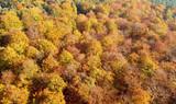 Aerial landscape - autumn trees