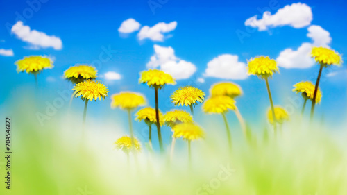 Plexiglas Geel Yellow dandelions in a green grass against the background of the blue sky with clouds. Natural summer spring background. Artistic natural image. Soft focus.