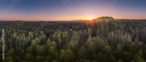 Fotobehang Landschappen Forest panorama