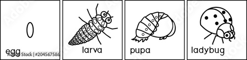 Coloring page. Sequence of stages of development of ladybug from egg to adult insect