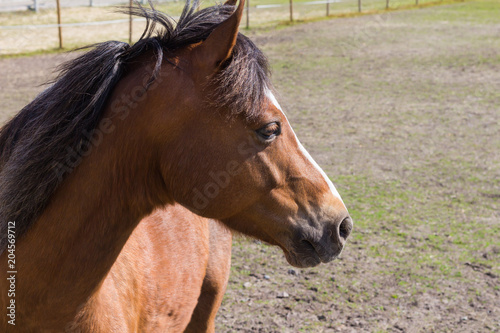 Plexiglas Paarden horse outside the stable