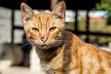 Cat in Limassol