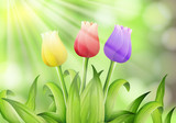 Colourful Tulip in Nature Background - 204583738