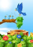 Birds in Nest om the Tree - 204584315