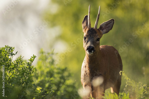 Fotobehang Hert Portrait of a deer with a nice sunny atmophere