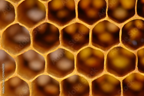 Bee honeycombs texture