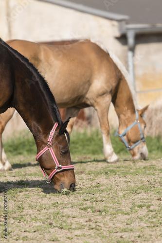 Plexiglas Paarden Adult horse in the outdoors.