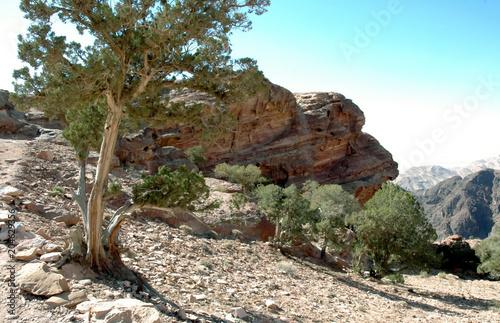 Plexiglas Beige Pétra, la ville rose,site archéologique taillé dans les falaises de grès rose, Jordanie