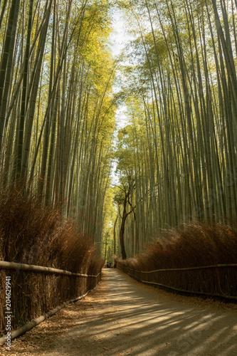 Plexiglas Kyoto 竹林の小径