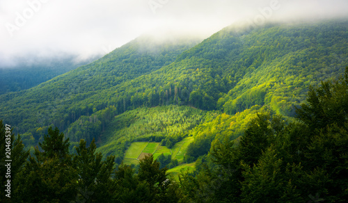 mountain pine forest and glade in the morning fog and sunrise light