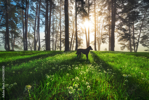 Plexiglas Lente Forest landscape and morning fog in spring