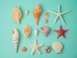 Summer concept with seashells and starfish - 204643754