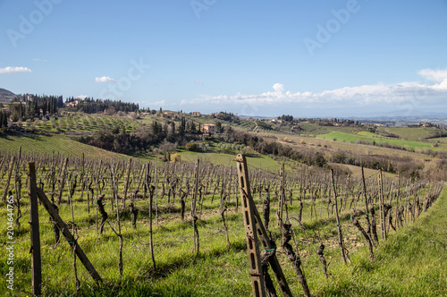 Fotobehang Wijngaard Vineyards, Tuscany, Italy