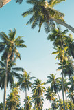 Tropical palm trees on clear summer sky background. Toned image - 204665921