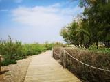 camino de madera en el pantano - 204666135