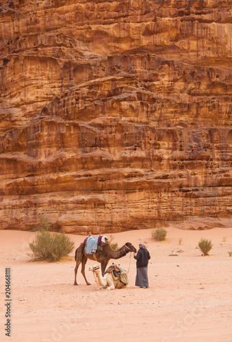 Aluminium Kameel Bedouin with his camels in Wadi Rum desert.