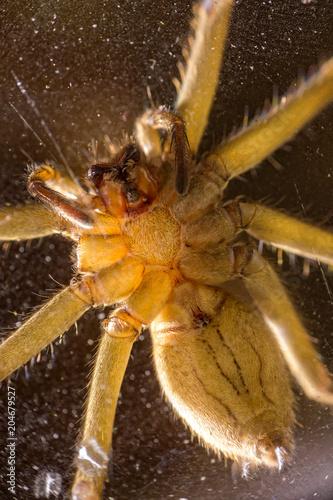 Fototapeta spider