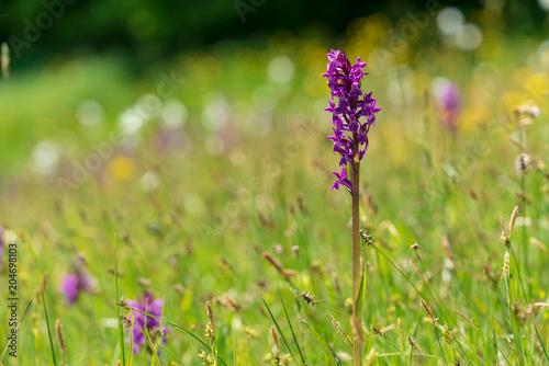 Aluminium Lavendel Blüte