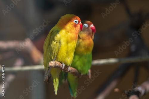 Aluminium Papegaai Vögel