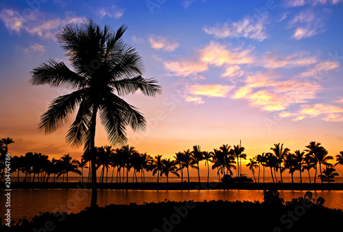 Palm tree silhouettes at Anaehoomalu Bay, on Big Island, Hawaii