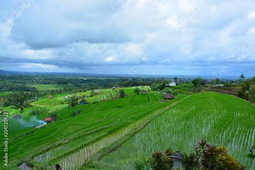 Fotobehang Groene インドネシアバリ島のジャティルウィ
