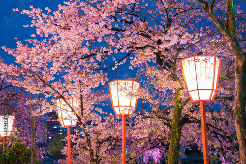 Plexiglas Kyoto 京都 宮川町の桜 夜景