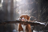 the dog put his paws on the stick. Pet in the forest