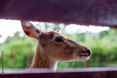 Fotobehang Hert Close up the eyes of a deer