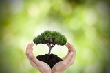 tree in the hands, environmen and nature protection - 204772164
