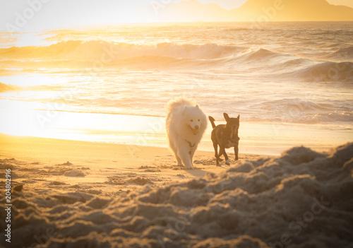 Plexiglas Zee zonsondergang Mongrel and Samoyed