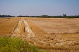 Harvested Wheat Field in Rural Kansas - 204837973