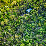 Top view of the green spring forest.Beautiful natural scenery . Aerial view