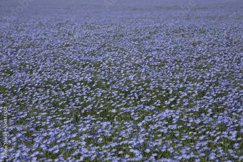 Aluminium Lavendel Lin