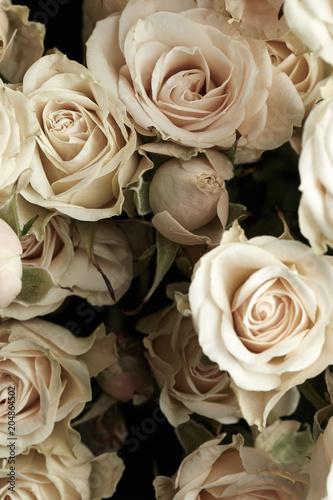 Fototapeta Beautiful roses