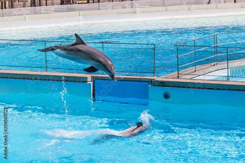 Aluminium Dolfijn Playing with dolphins