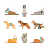 Cats and Dogs Get Sick, Injured, Hurt, Wounded, Vector Set - 204873925
