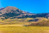 The yellow grass field