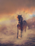 Chestnut pony runs on the sand in the dust on the sunset clouds background