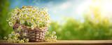 Basket of chamomile flower