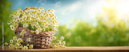 Fototapeta Basket of chamomile flower