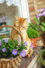 Rote Katze auf einem mit Balkon