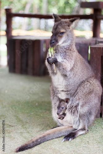 Aluminium Kangoeroe Wallaby small kangaroo in the garden